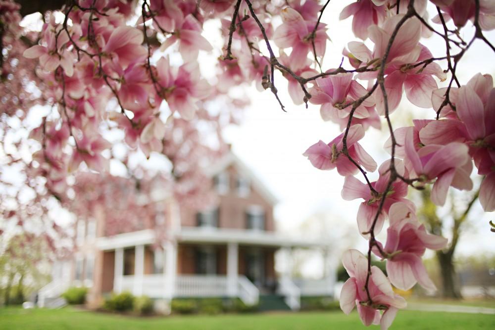 Magnolia Front Porch