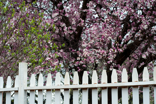 Radical Lives and White Picket Fences