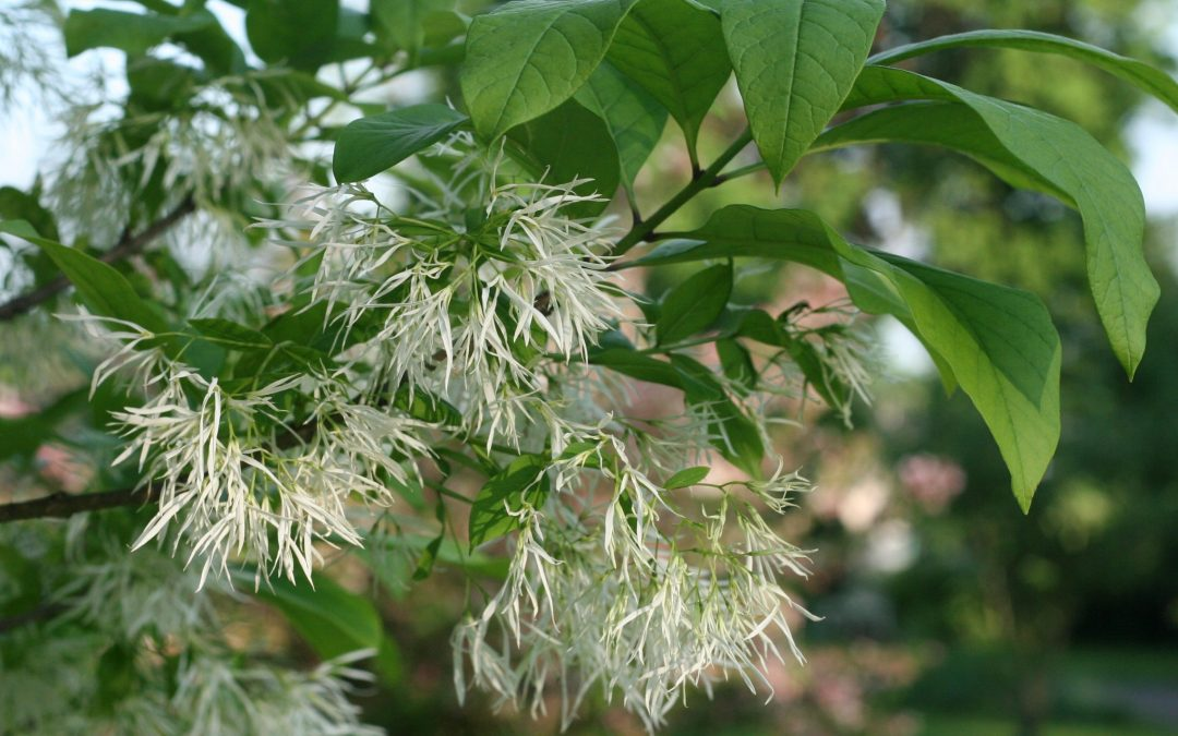 A New Point of View on Native Plants